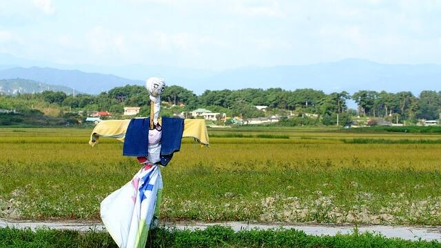 四川省の水田を見守るカカシ