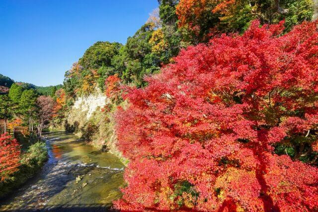 懸崖境紅葉 養老渓谷