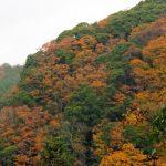 養老渓谷紅葉