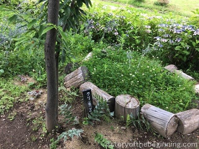 賢治ガーデン(佐久市交流ひろば)